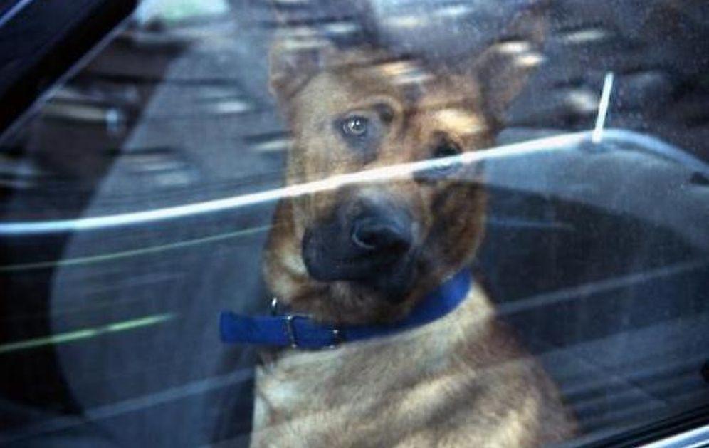 Custodisce numerosi cani caccia in pieno centro di Sanremo disturbando la quiete pubblica, multato