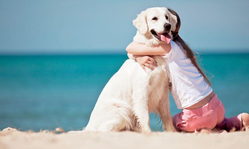 Il Comune di Diano Marina spende 34 mila euro all'anno per cani randagi e animali feriti, ma il prezzo è fermo da 9 anni