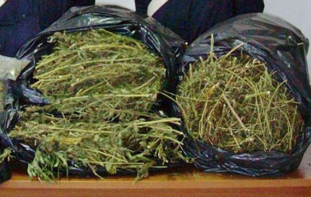 Ventimiglia, due italiani coltivano in casa piantine di marijuana. Denunciati dalla Polizia