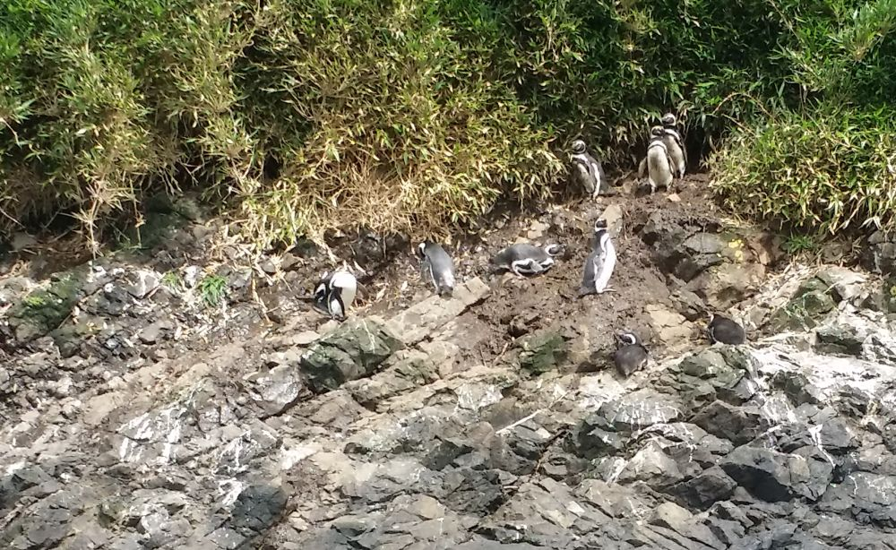 Viaggiareoggi: reportage dal Cile del nostro collaboratore Maurizio Priano. Seconda parte coi pinguini