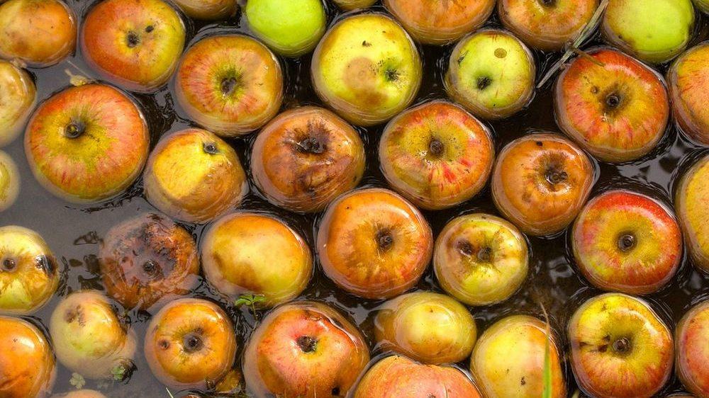 Dal camion fermo in autogrill escono liquami: Frutta marcia destinata ad impianti di lavorazione per succhi di frutta! Accade a Ovada
