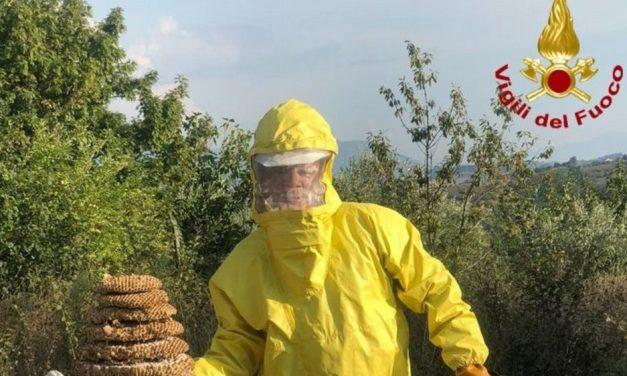 Alla festa a San Sebastiano Curone arrivano anche i calabroni e intervengono i pompieri