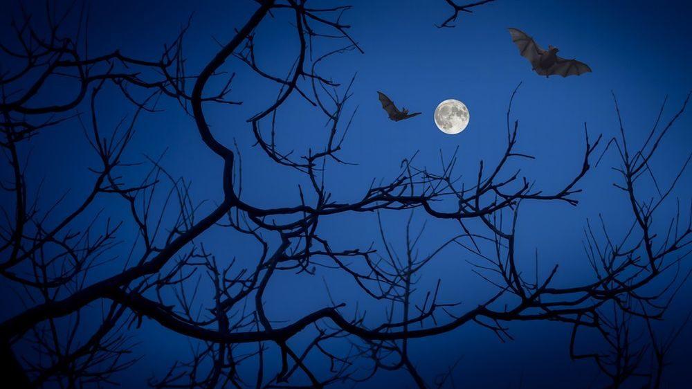 24 agosto: Storie di pipistrelli all'Oasi Naturalistica di Isola Sant'Antonio