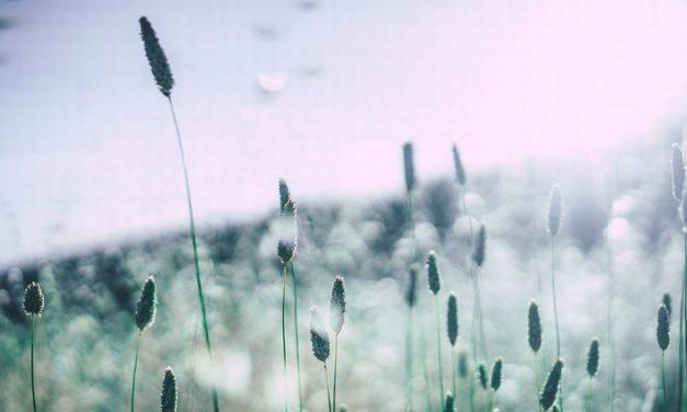 Non solo allergie: i pollini testimoni del cambiamento climatico