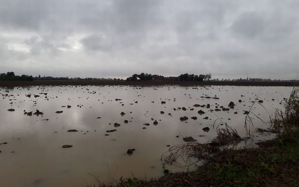 Maltempo, raddoppiati nubifragi a novembre Campi allagati e danni all'agricoltura