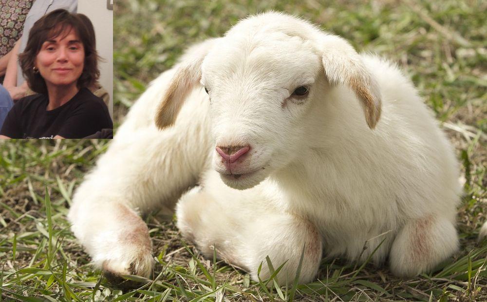 La tortonese Paola Re scrive una dura lettera all'Unione Sarda sul massacro di animali, che la pubblica