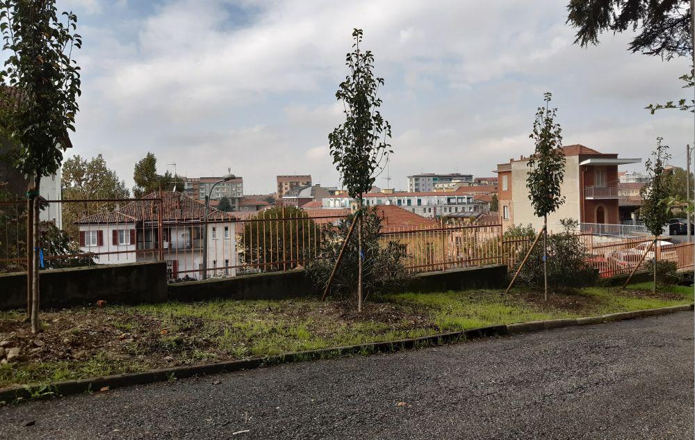 """Nuovi alberi al Liceo """"Giuseppe Peano"""" di Tortona regalati dai giovani diplomati a luglio"""