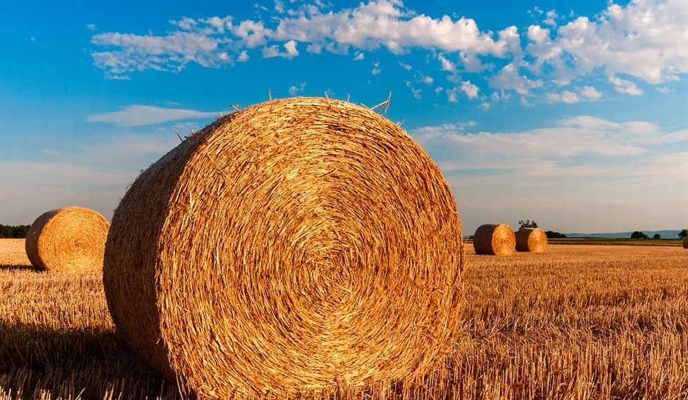 Coronavirus: per Confagricoltura ora serve un piano strategico europeo per il rilancio del sistema agroalimentare