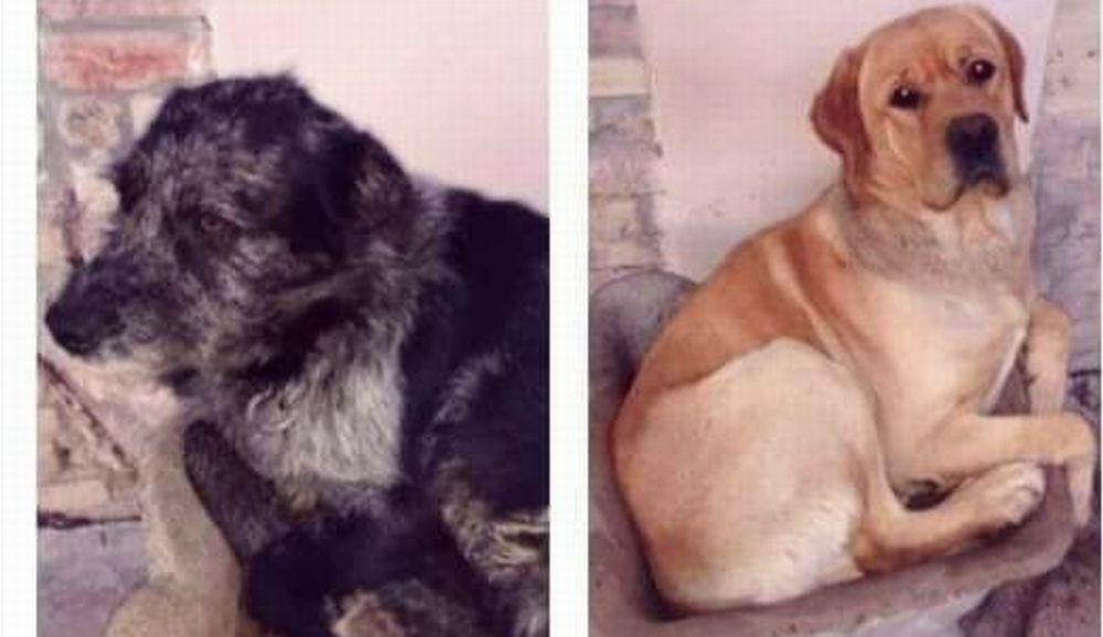 Qualcuno nel Tortonese spara ai cani. E' accaduto a questi due: uno è salvo, l'altro disperso. Non è il primo caso