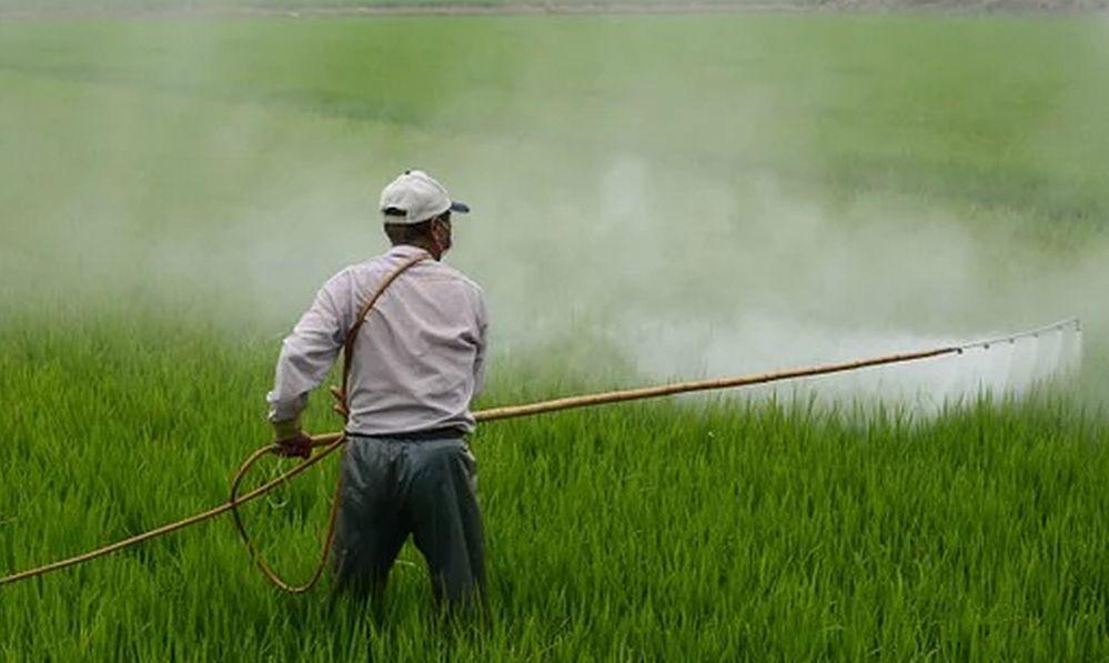 La Regione Piemonte cerca cimici asiatiche per un allevamento al fine di distruggerle