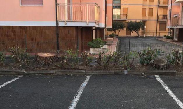 Tagliati i pini di Piazza Doria a San Bartolomeo al mare: facevano troppi danni