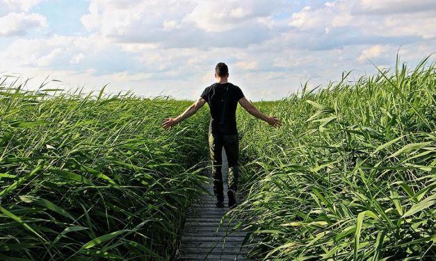 Gestione ambiente sospende il servizio di raccolta del verde: Non tagliate l'erba dei giardini perché rimane lì