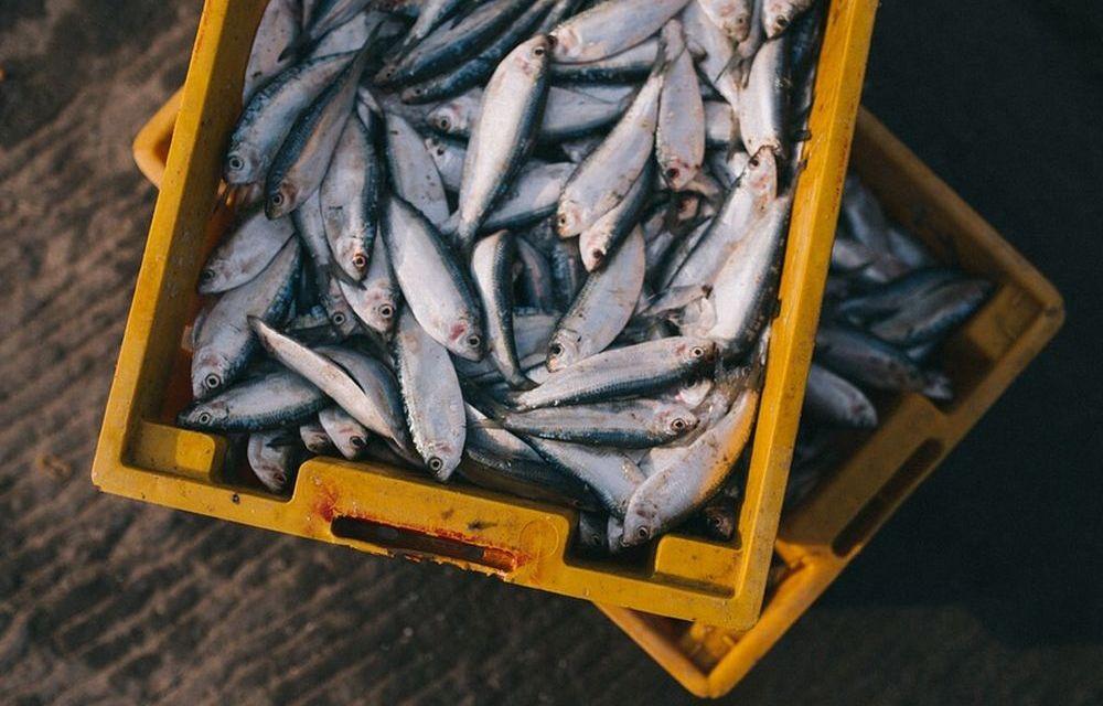In Liguria pesca e campagnanon si fermano