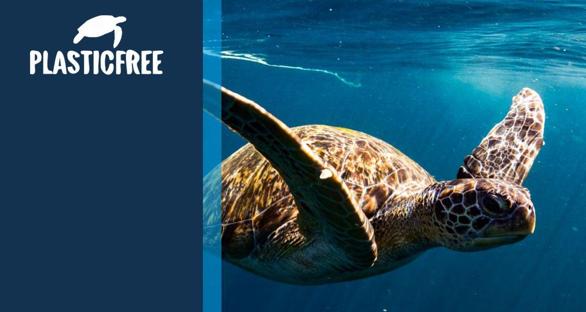 """E' nata """"Plastic free"""" associazione contro l'inquinamento della plastica in mare. I link"""