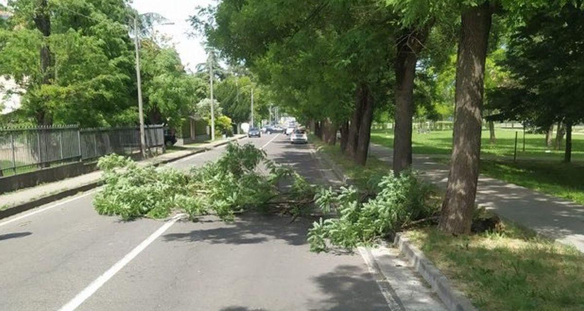 A Tortona albero blocca il traffico in via Emilia e tanti interventi dei pompieri per il vento. Le immagini