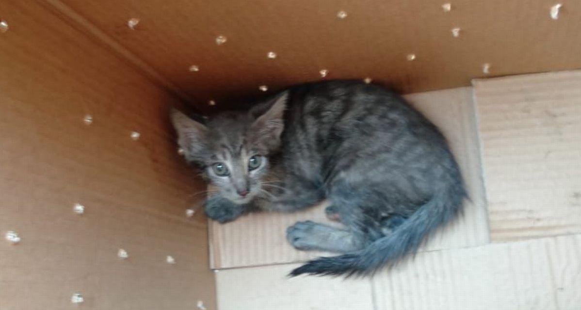 Gli Ispettori Ambientali di Alessandria salvano questo gattino finito nel vano-motore di un'auto