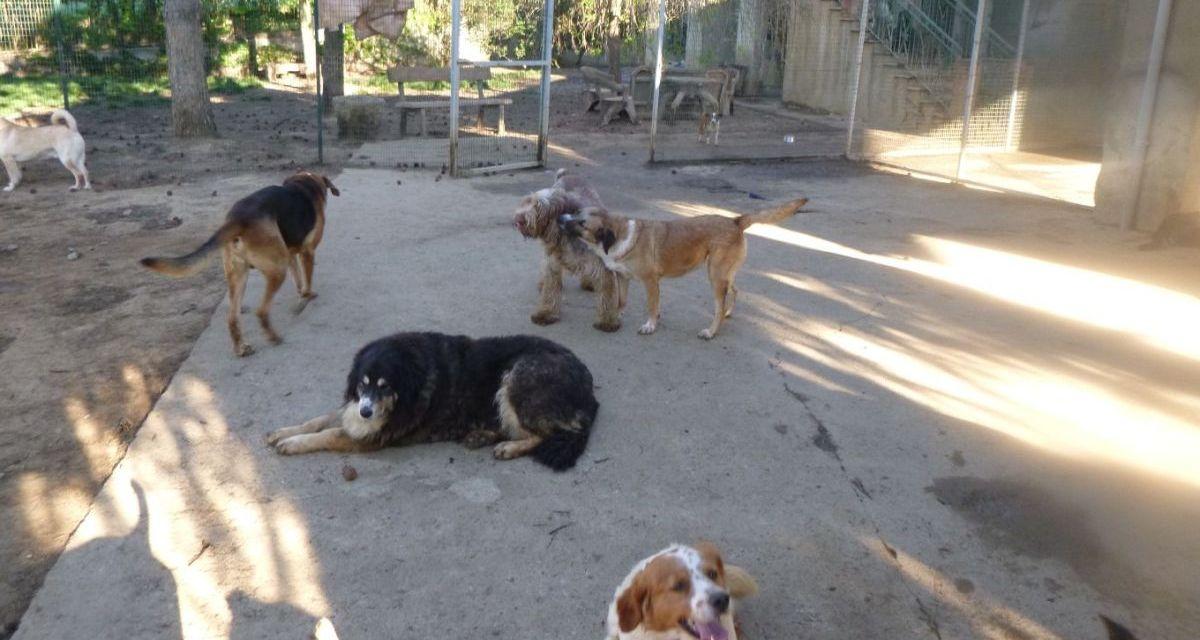 Tenere i cani in condizioni incompatibili è contro la legge, condannata ad Alessandria la donna che ne aveva 101 cani