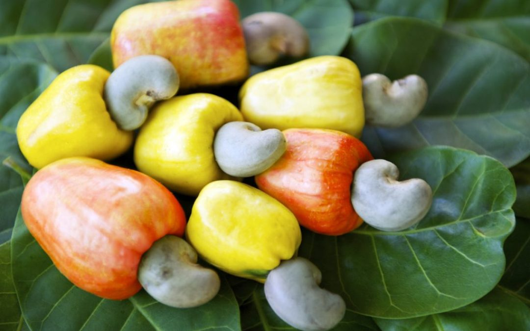 How to Process your Cashew