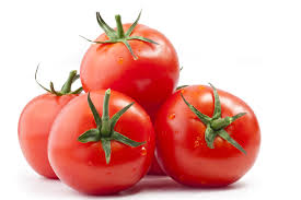 Workshop on Tomato Processing