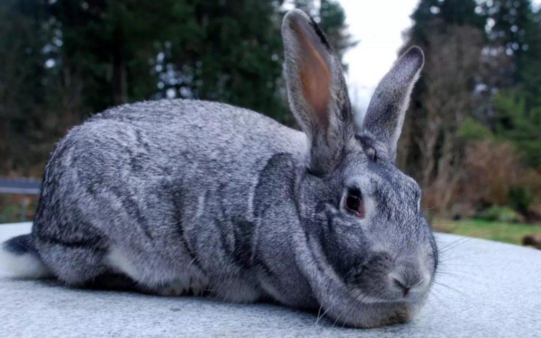 How to Start Rabbit Farming in Nigeria
