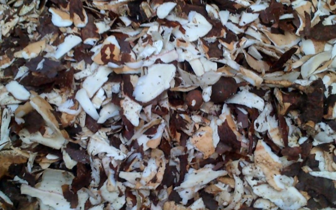 Commercial Livestock Feed to be Obtained from Cassava Peels