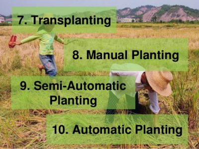 Planting problems: land preparation and planting methods