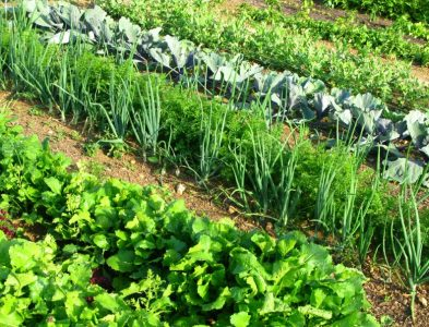 NPK Fertilizer: What is it and How Does it Work?