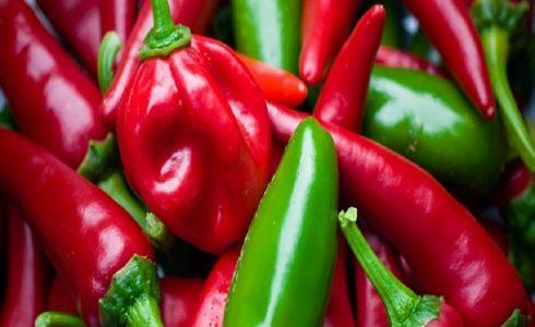 Pepper Farming in Nigeria – Chili and Green