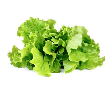 Planting Lettuce, The 'King' of Antioxidant