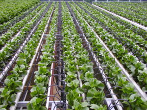 What Profitable Farms Do Differently and How You Can Emulate Them