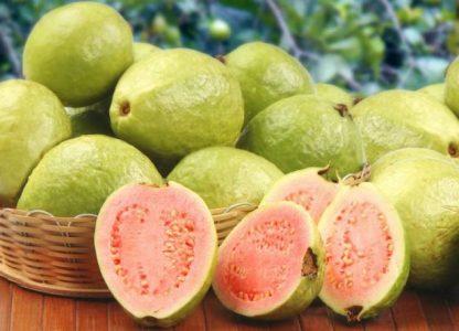 Psidium guajava {Guava} agronomic Practices
