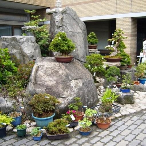 Bonsai à Kokubunji