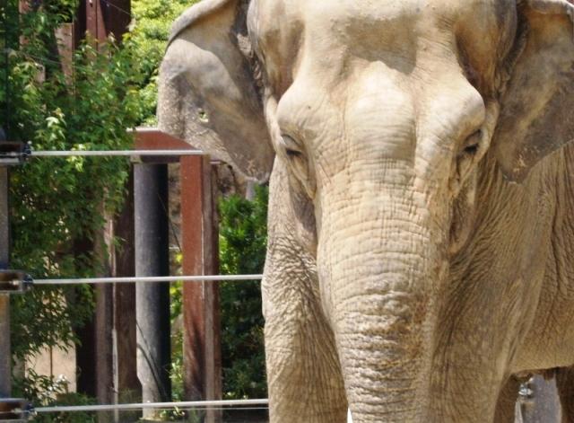 Elephant - Ueno