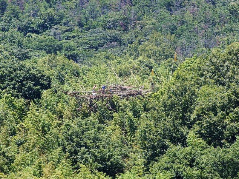 2 - Quelque chose dans les bambous