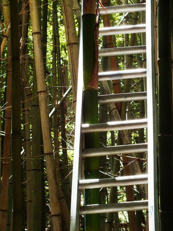 Big Bambu Preview - 7