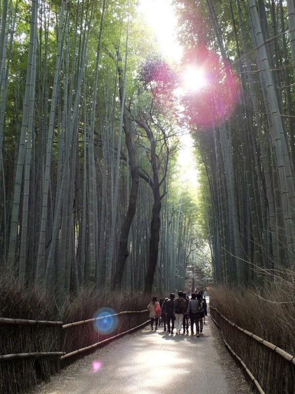 Bambous Arashiyama - 13