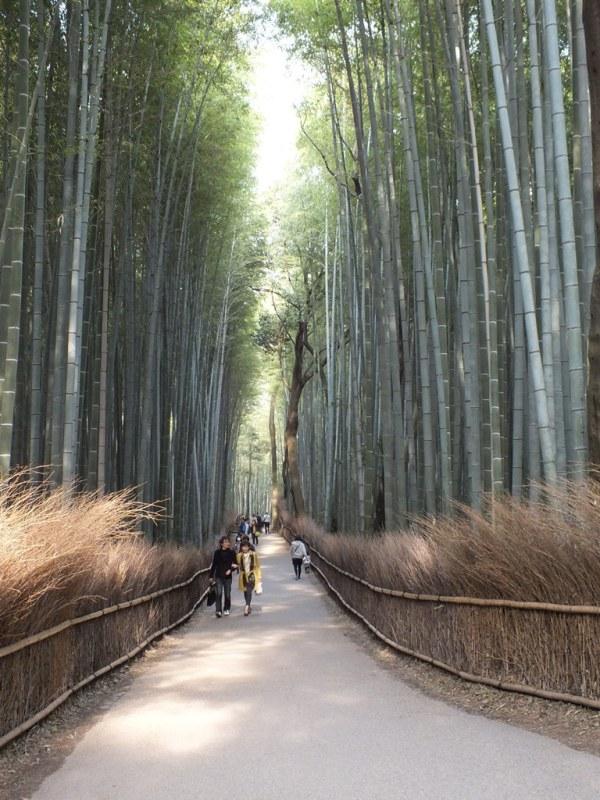 Bambous Arashiyama - 18