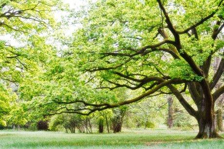 дерево для домика
