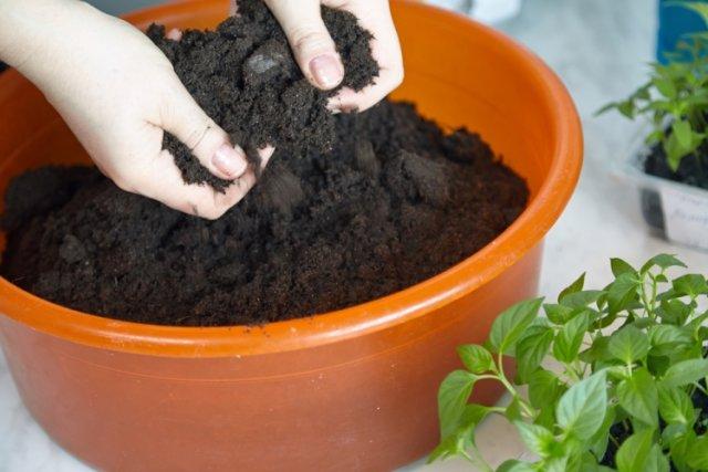 Domates için toprak hazırlanması