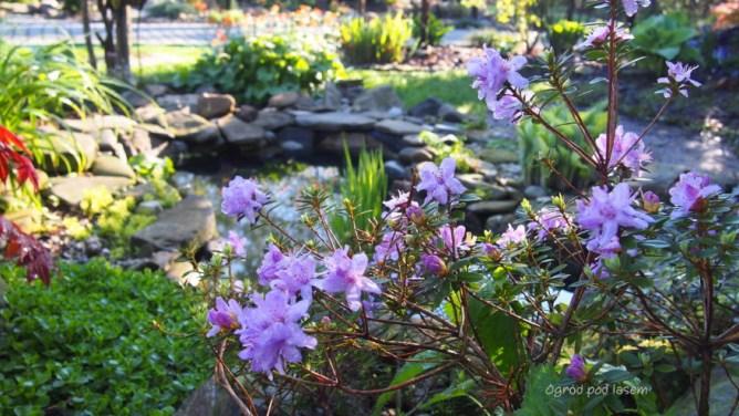 Oczko wodne w ogrodzie, czyli stawik