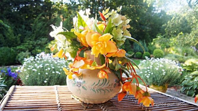 Begonia bulwiasta