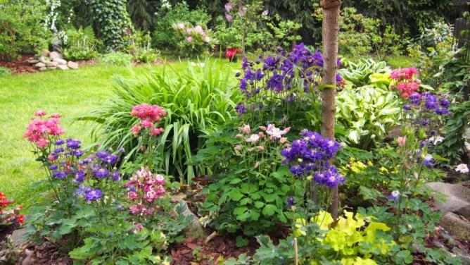 Orlik ogrodowy