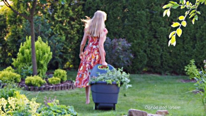 Ogród pod lasem