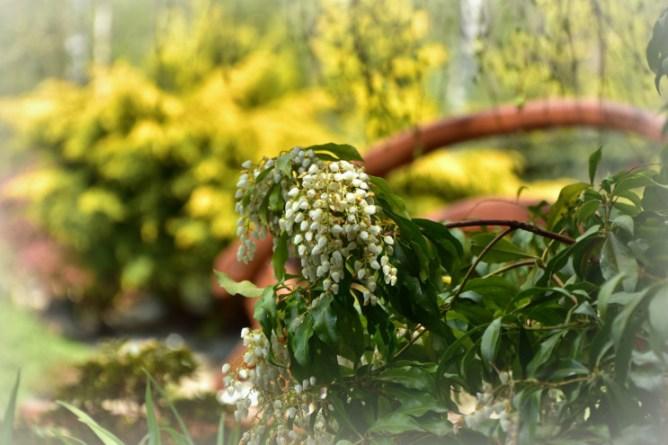 W tym roku susza sprawiła, że kwiatów trochę mniej