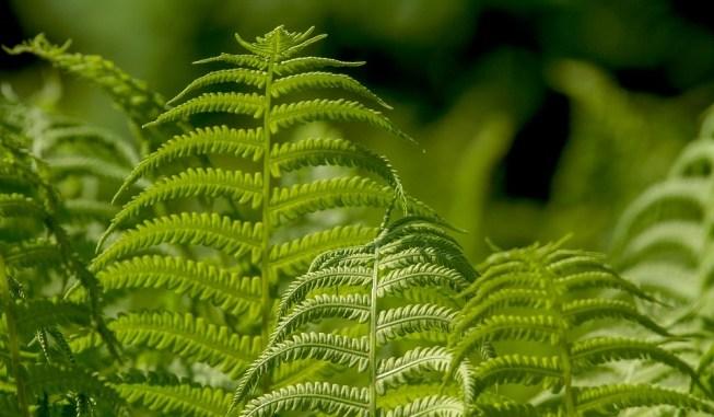 bitkiler acıyı hisseder mi
