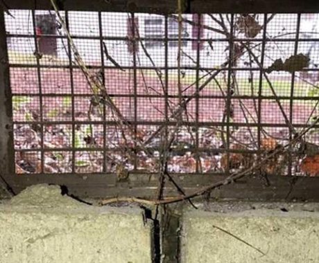 Can Trees Damage Your Crawl Space?