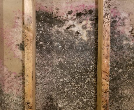 Mold Prevention Solutions in Greater Cleveland