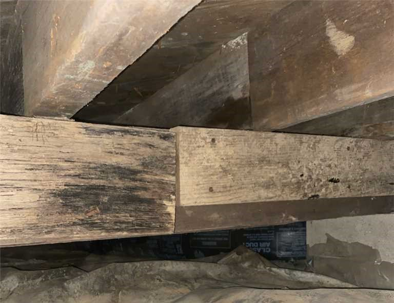 crawl space wood rot problems