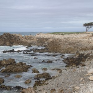 17-Mile Drive, California ~ ohiogirltravels.com
