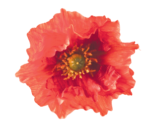 poppy-rossi_cropped
